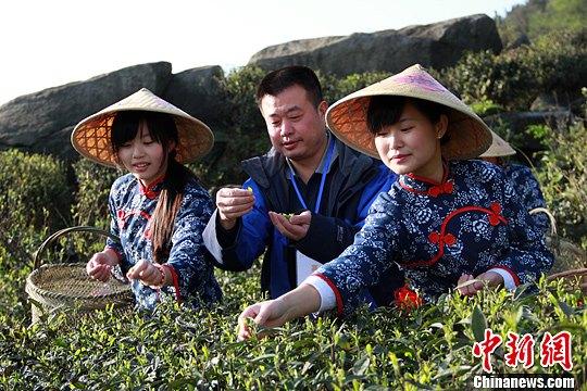 湖南南岳举行春茶祭奠 采茶女采摘云雾茶鲜叶