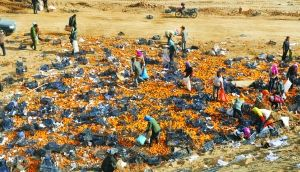 货车高速侧翻31吨橘子洒落 村民边抢边吃