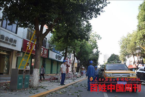 陕西地方电力集团西乡供电分公司清树障排隐患保供电