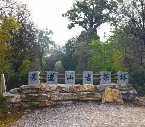 云林茶会景迈山茶推介会在杭州灵隐寺举行