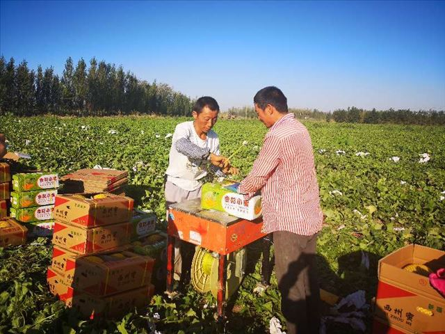 """新疆呼图壁县五工台镇十户村的""""甜蜜事业"""""""