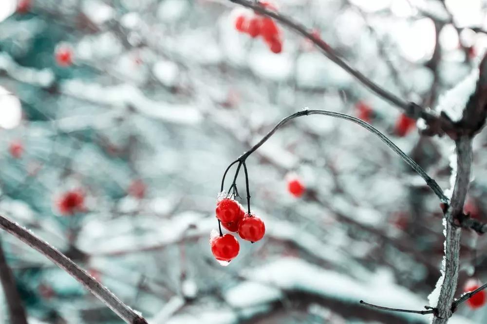 凯发注册中华凯发注册推荐:冬至大如年,人间共团圆