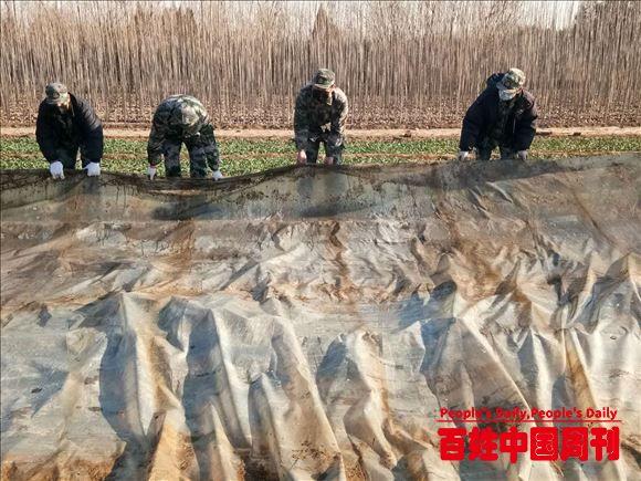 """河北沧州:活跃在复产复工复耕和扶贫一线的""""迷彩人"""""""