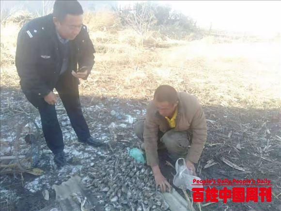 黑龙江:野保志愿者协助公安机关破获一起非法设网捕猎迁徙候鸟案