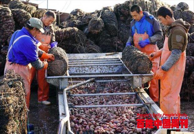 河北乐亭:立体生态养殖促增收