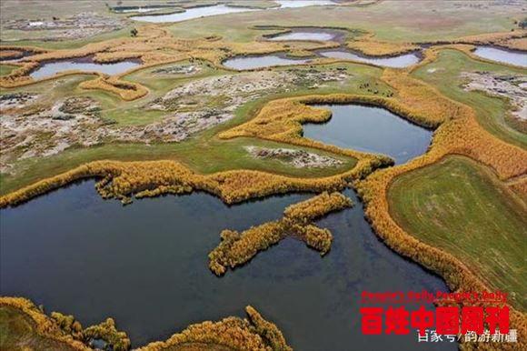 新疆科克苏湿地,美到窒息,这里是鸟的世界啊!
