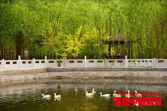 河北沧州穆远方:我在陶令园等你